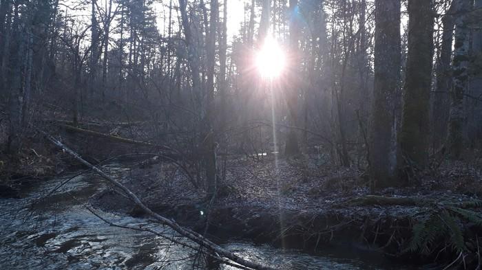 Утренний лес близ пещеры Стерегущее Копьё, Дальний Восток. Лес, Ручей, Утро