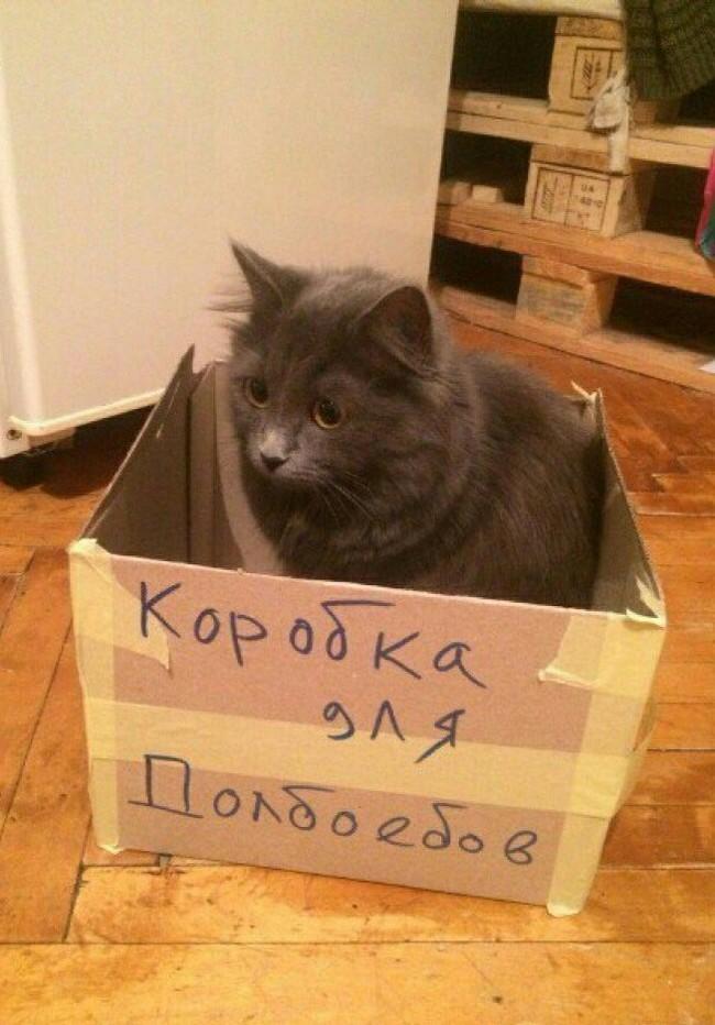 Special for PiKaBy)) Кот, Пикабу, Сколько можно