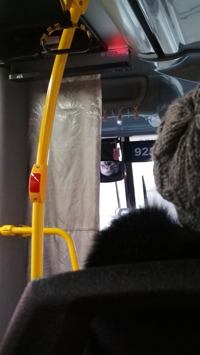 Как трогать девушек в автобусе