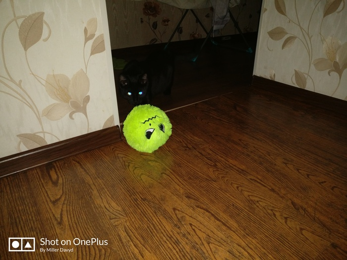 Во мгле ночной, при свете дня Кот, Мягкая игрушка, Светящиеся глаза, Котомафия
