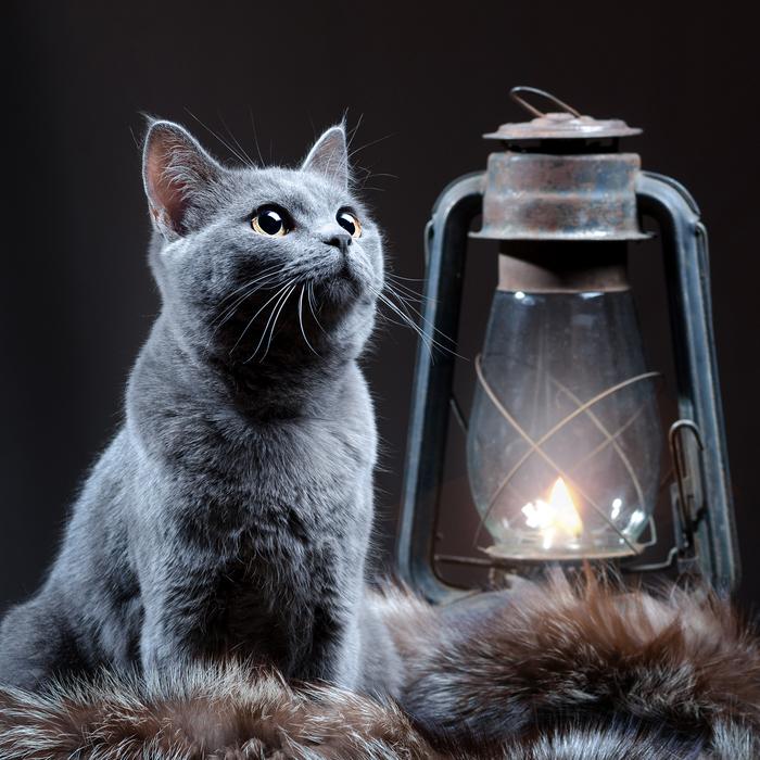 Ламповый кот Кот, Лампа, Пушистый красавец