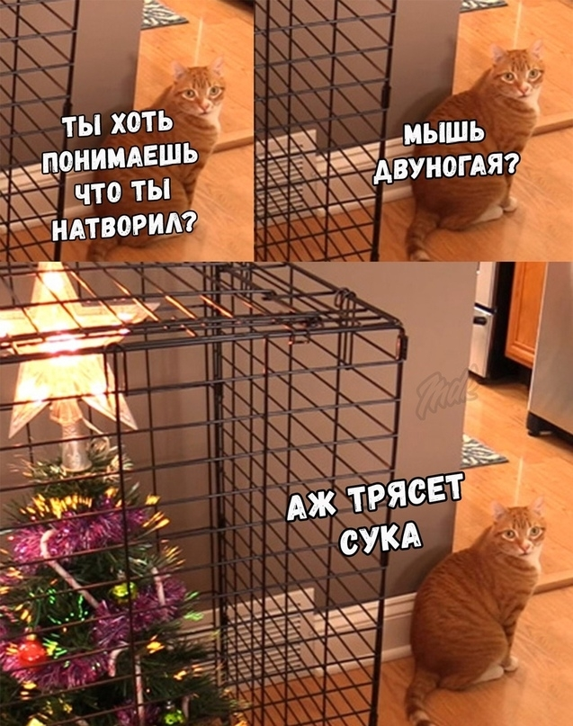 Кот не одобряет