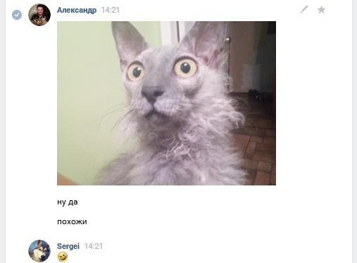 Лев и кот одновременно! Кот, Лев, Скриншот, ВКонтакте