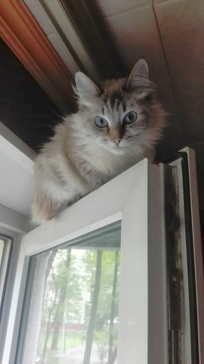 Monorail cat is watching you Кот, Окно, Пушистый