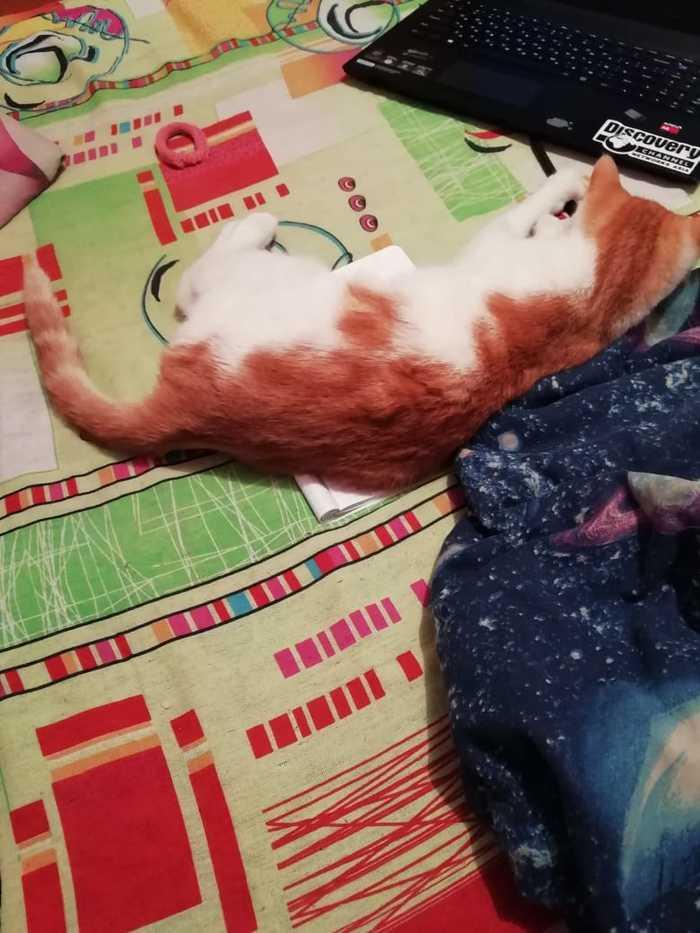 Когда кот решает за тебя,  учиться тебе или нет Кот, Учеба, Животные, Милота