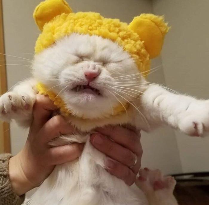 Злой котик Животные, Кот, Юмор, Злость, Мода, Длиннопост