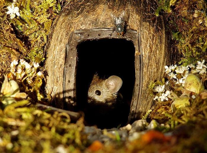 Мышиная деревня Саймона Дэлла Мышь, Фотограф, Длиннопост