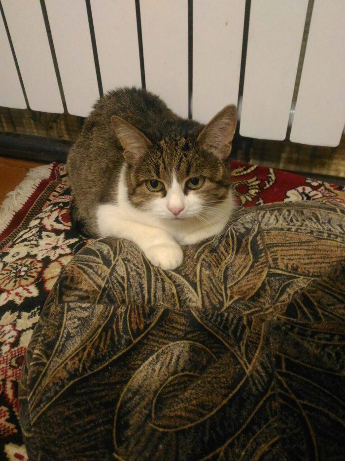 Моя котейка грустит... Кот, Грусть, Глаза