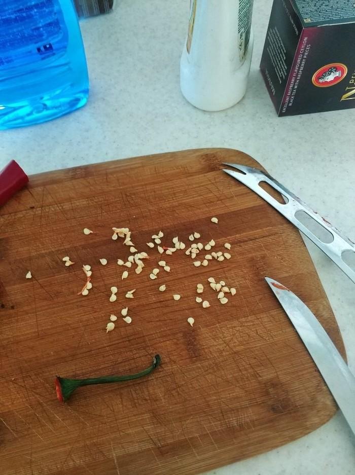 Как я растил перец чили из магазина Чили, Перец, Садоводство, Огород, Длиннопост