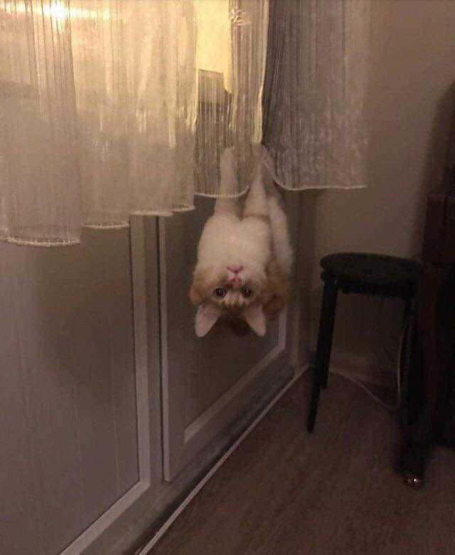 Сфоткай , типа я - летучая мышь