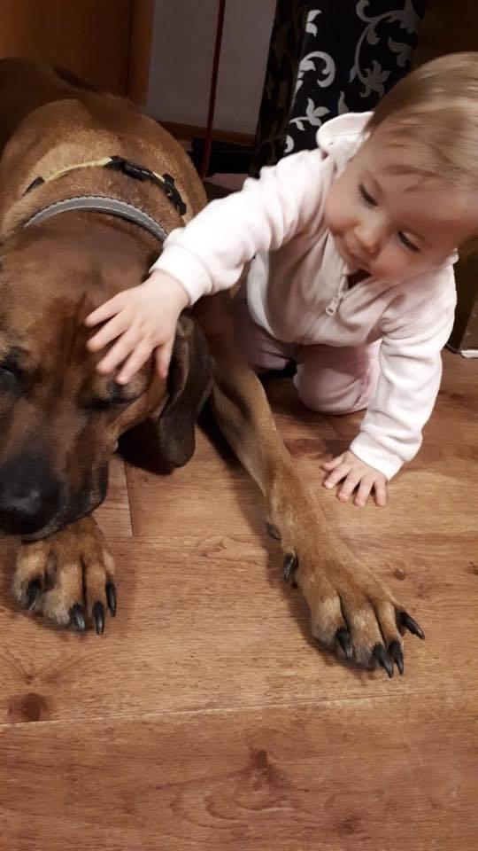 Собака ищет нового хозяина! Собака, Срочно, Длиннопост, Нижний Тагил, Ищу дом, Без рейтинга