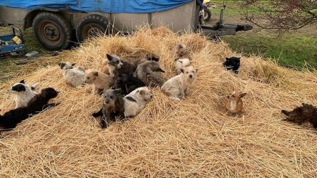В США спасли более ста пропавших ранее щенков Собаки и люди, Животные, Охрана природы, Щенки