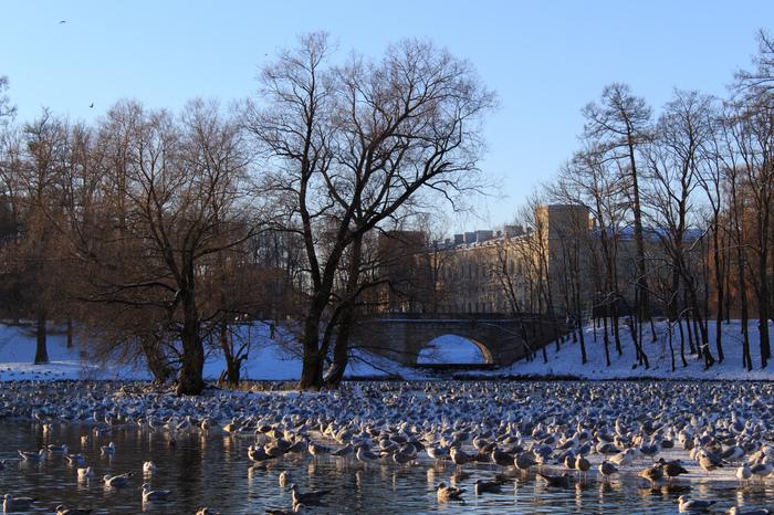 Гатчина Начинающий фотограф, Гатчина, Canon, Зима, Птицы, Дворец, Фотография