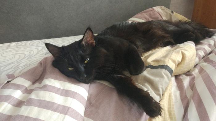Черный бестий Кот, Черный кот, Друг человека, Длиннопост