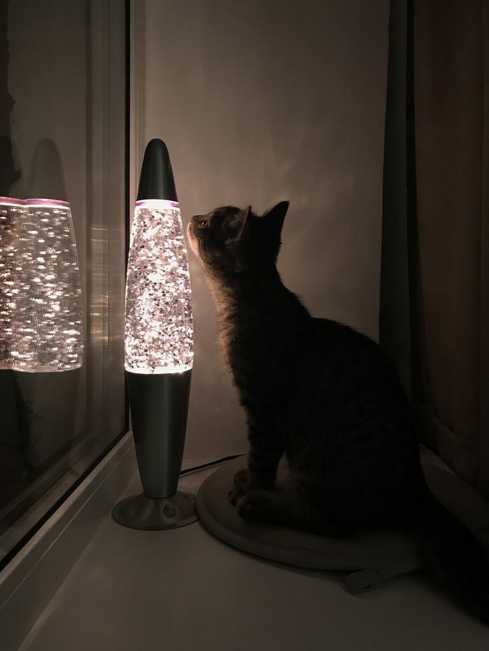 Любопытный котенок и лава-лампа Кот, Лампа