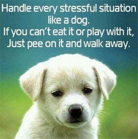 Лучший жизненный совет Собака, Жизненно, Совет, 9GAG, Картинка с текстом