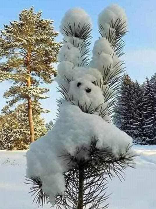 Снегопёс