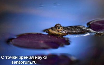 Лягушки умеют различать цвета в полной темноте Зоология, Билогия, Эволюция, Теория эволюции, Разумный замысел, Наука, Земноводные, Лягушки, Длиннопост