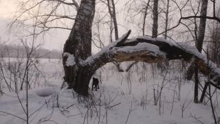 Стоило попробовать раз.... Собака, Прыжок, Дерево, Русский спаниель, Гифка
