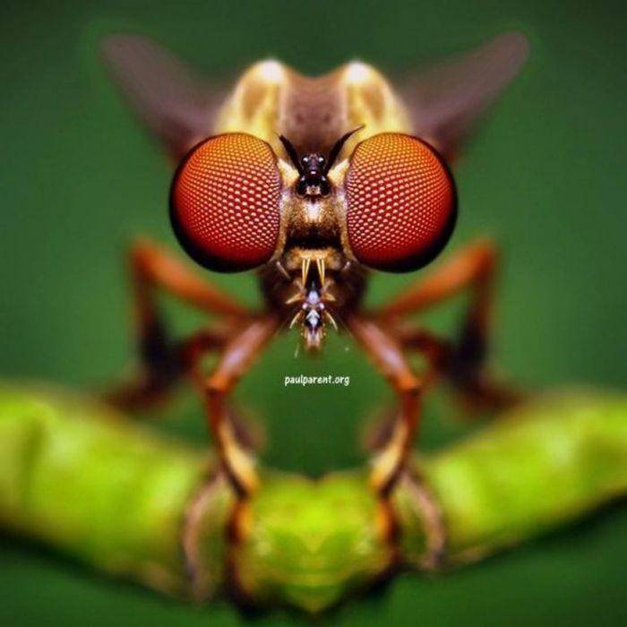 Портреты насекомых с очень близкого расстояния Природа, Насекомые, Портрет, Макро, Длиннопост, Фотография