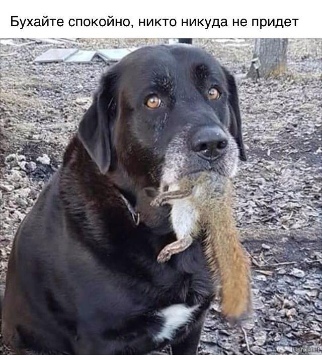 https://cs7.pikabu.ru/post_img/2018/12/06/9/1544105231114336820.jpg