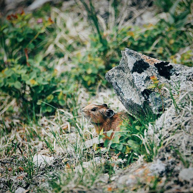 Камчатка Камчатка, Фотография, Красота, Длиннопост