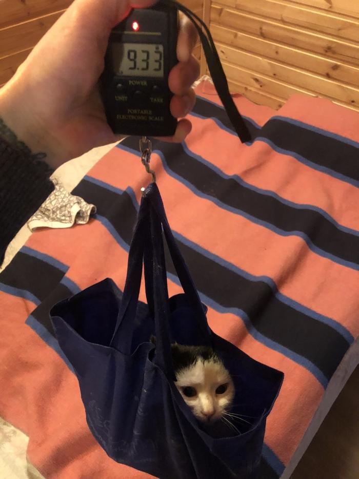 9 кг кота. Кот, Весы, Жирные