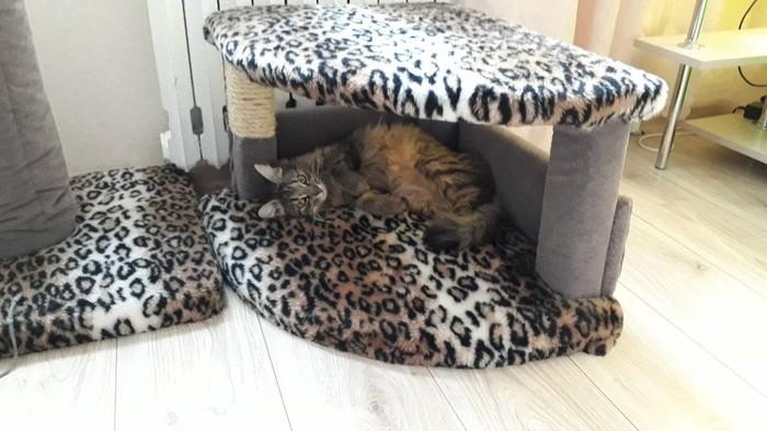 Леопарды снова в моде. А котики - всегда