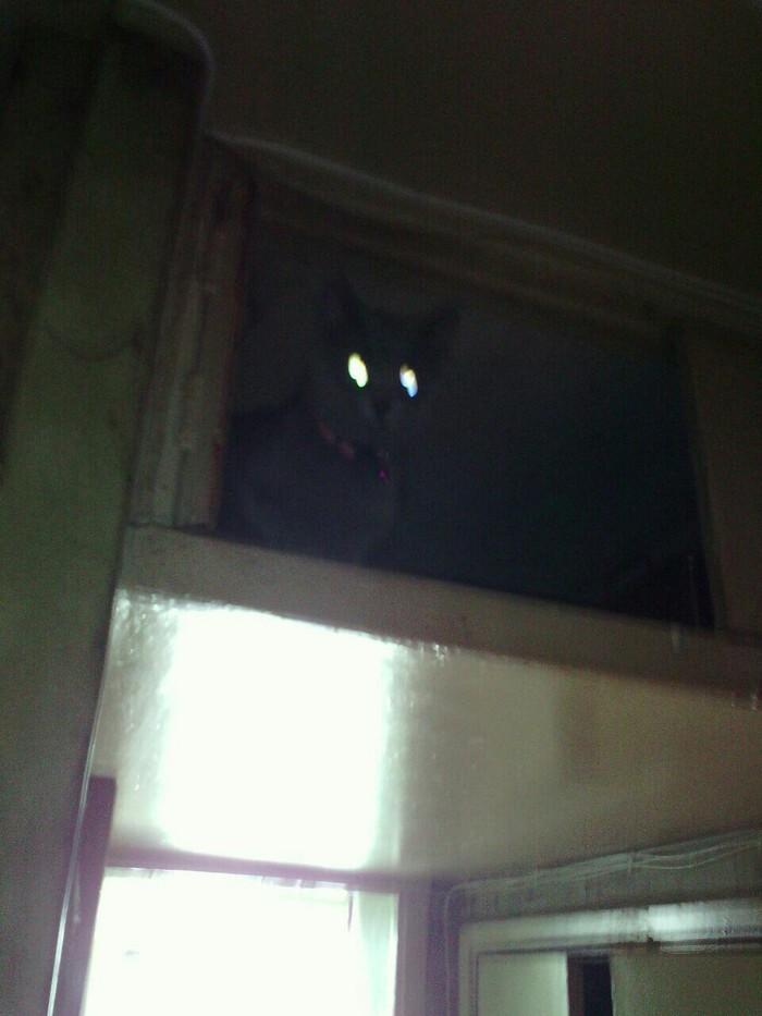 Соседей нам не надо. У нас свой вредитель есть.) Кот, Соседи, Вредители, Шартрез, Длиннопост