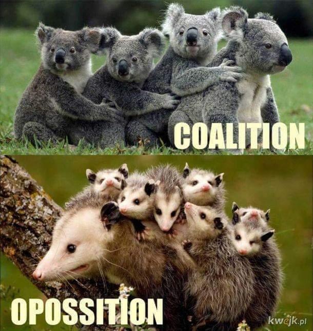 Коалиция и оппозиция