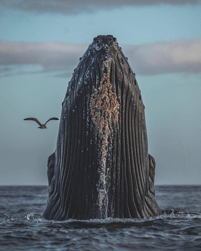 Горбатый кит во всей красе