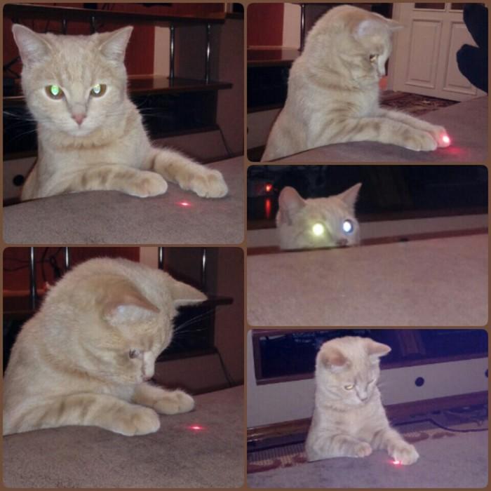 Игра с лазерной указкой Кот, Лазерная Указка