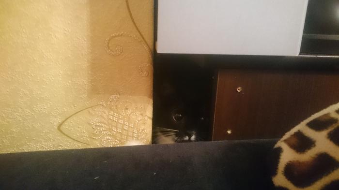 Незванные гости. Кот, Текст, Фотография