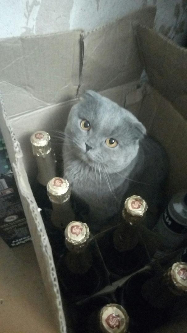 Как до НГ еще три недели ?? Кот, Коробка, Новый Год, Шампанское, Длиннопост