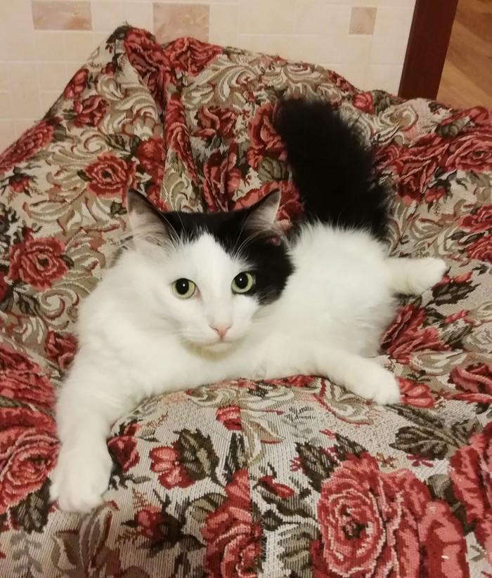 Васян. Кот, Котомафия