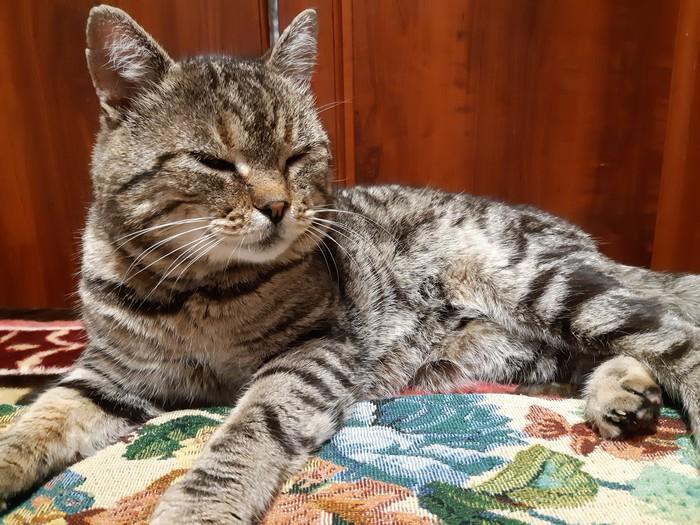 Коты нашли свой дом Котомафия, Кот, Черный кот, Длиннопост