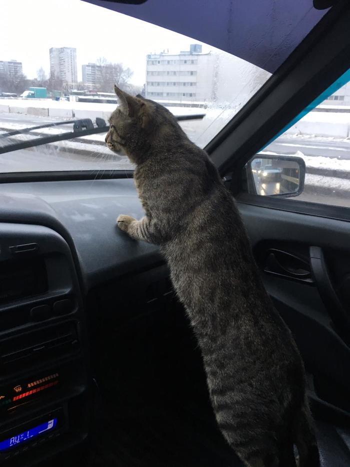Мой кот ездит так Кот, Котомафия, Длиннопост, Авто, Кот с лампой, Фотография