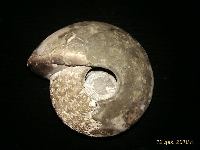 Раковина Без рейтинга, Палеонтология
