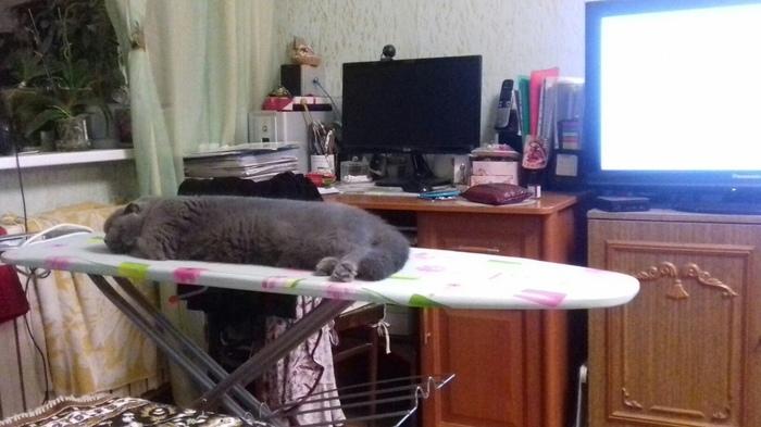Погладь меня Кот, Гладильная доска, Сон