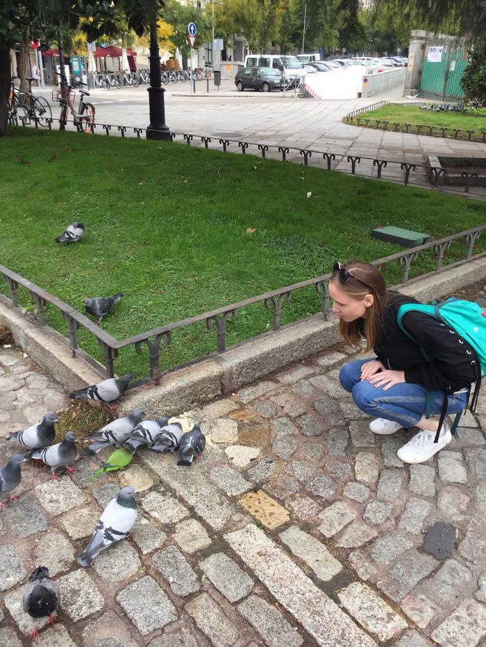 Мадридские голуби или свой среди чужих, чужой среди своих Мадрид, Испания, Чужой, Длиннопост, Голубь, Попугай, Птицы