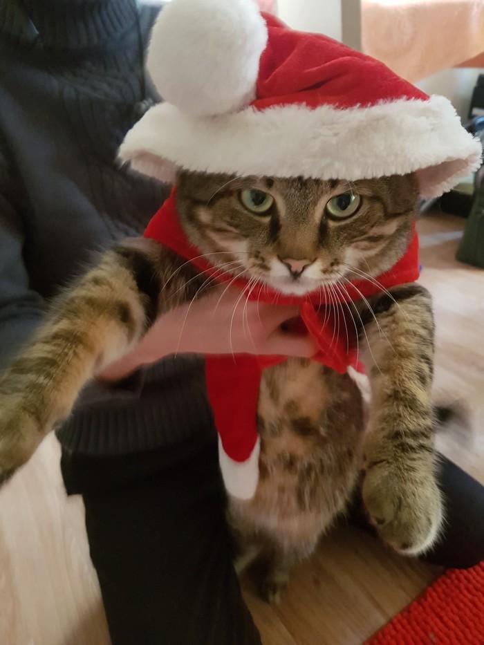 С Наступающим!:) Кот, Очень скоро Новый год, Животные, Домашние животные