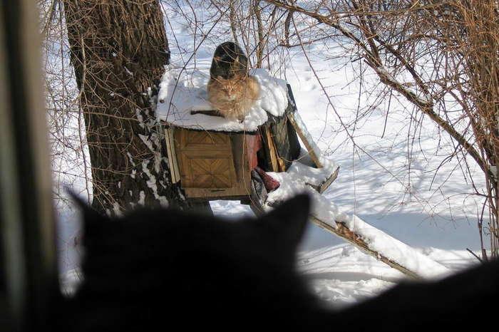 Дистанционное обучение Кот, Зима, Фотография