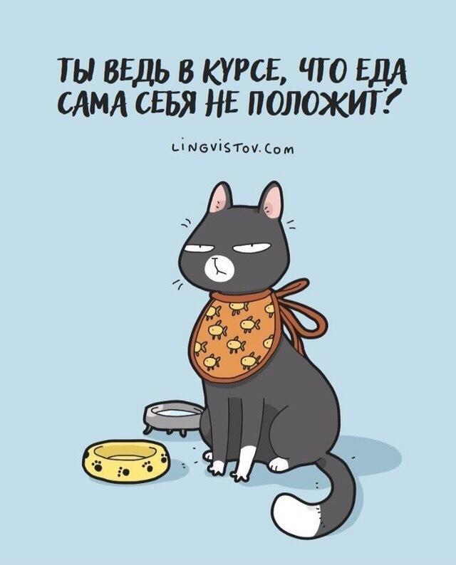 Из жизни с котом Кот, Картинки, Юмор, Длиннопост