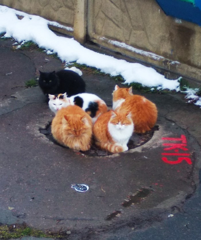 Всем тепла, котаны! Кот, Котомафия, Зима