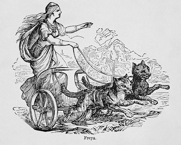 Как кошки стали «воплощением зла» и мишенями для инквизиции История, Церковь, Религия, Папа Римский, Инквизиция, Христианство, Мифы, Средневековье, Длиннопост