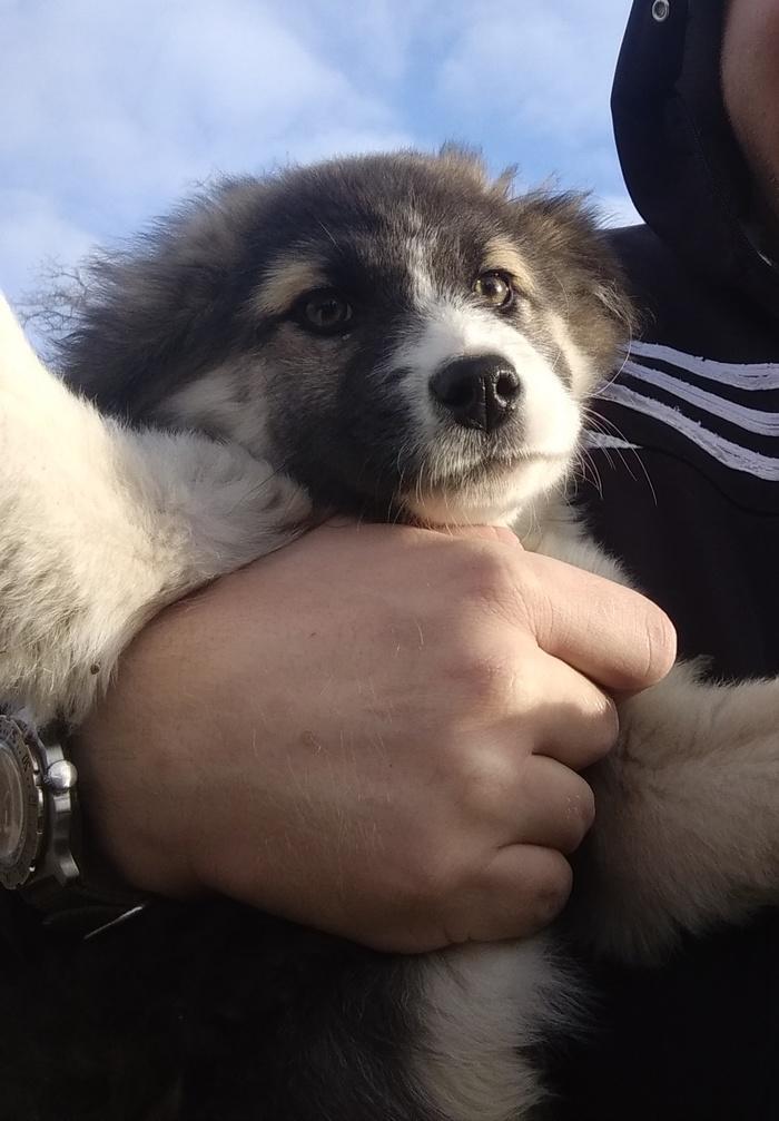 Селфи Собака, Селфи