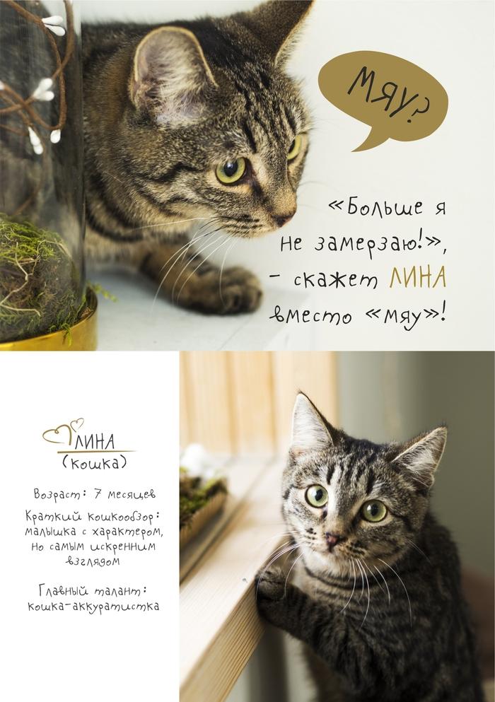 Котики приюта ищут дом! Кот, Котята, Котомафия, Приют для животных, Челябинск, Милота, Новый Год, Помощь, Длиннопост