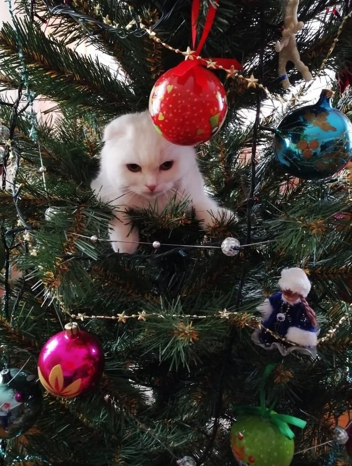 Дождалась Новый Год, Новогодняя елка, Кот, Кошкин дом