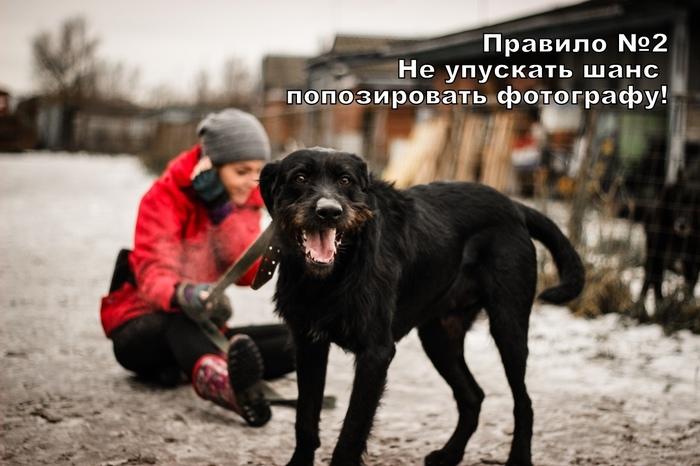 Правила хорошей прогулки от Бадди из приюта Ржевка, СПб Собака, Приют для животных, Санкт-Петербург, Длиннопост, Без рейтинга, В добрые руки, Ищу хозяина