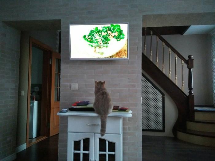 Учимся готовить с Высоцкой Коты тоже люди, Котомафия, Телевизор, Кот